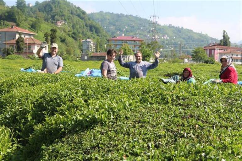 Çay göçü hız kazandı Uzmanlardan izole çağrısı